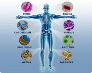 immune-body